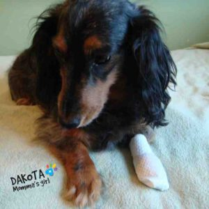 PawFlex Medimitts poot verband