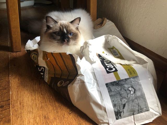 Allweneedis Ragdoll met Carnis kattenbrok
